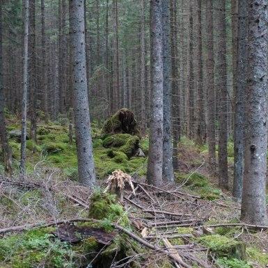 Lány az erdőben, Tátra