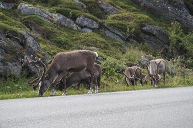 Útban Øksfjord felé