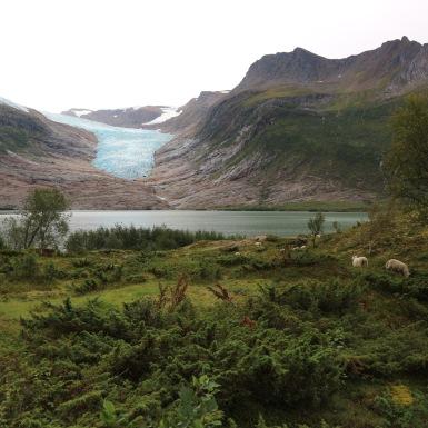 Svartisen, Norvégia