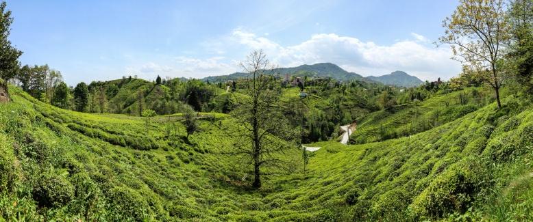 Panorama_Rize Cai